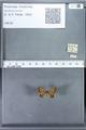 http://mczbase.mcz.harvard.edu/specimen_images/ent-lepidoptera/images/2010_01_06/IMG_027396.JPG