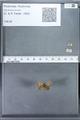 http://mczbase.mcz.harvard.edu/specimen_images/ent-lepidoptera/images/2010_01_06/IMG_027397.JPG