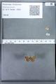 http://mczbase.mcz.harvard.edu/specimen_images/ent-lepidoptera/images/2010_01_06/IMG_027398.JPG