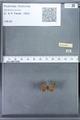 http://mczbase.mcz.harvard.edu/specimen_images/ent-lepidoptera/images/2010_01_06/IMG_027399.JPG
