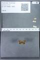 http://mczbase.mcz.harvard.edu/specimen_images/ent-lepidoptera/images/2010_01_06/IMG_027400.JPG