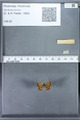 http://mczbase.mcz.harvard.edu/specimen_images/ent-lepidoptera/images/2010_01_06/IMG_027401.JPG