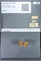 http://mczbase.mcz.harvard.edu/specimen_images/ent-lepidoptera/images/2010_01_06/IMG_027403.JPG
