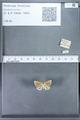 http://mczbase.mcz.harvard.edu/specimen_images/ent-lepidoptera/images/2010_01_06/IMG_027404.JPG