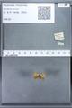 http://mczbase.mcz.harvard.edu/specimen_images/ent-lepidoptera/images/2010_01_06/IMG_027408.JPG