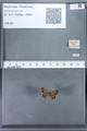 http://mczbase.mcz.harvard.edu/specimen_images/ent-lepidoptera/images/2010_01_06/IMG_027409.JPG