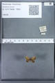 http://mczbase.mcz.harvard.edu/specimen_images/ent-lepidoptera/images/2010_01_06/IMG_027410.JPG