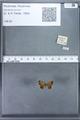 http://mczbase.mcz.harvard.edu/specimen_images/ent-lepidoptera/images/2010_01_06/IMG_027411.JPG
