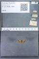 http://mczbase.mcz.harvard.edu/specimen_images/ent-lepidoptera/images/2010_01_06/IMG_027412.JPG