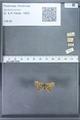 http://mczbase.mcz.harvard.edu/specimen_images/ent-lepidoptera/images/2010_01_06/IMG_027413.JPG