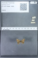 http://mczbase.mcz.harvard.edu/specimen_images/ent-lepidoptera/images/2010_01_06/IMG_027414.JPG
