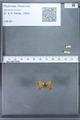 http://mczbase.mcz.harvard.edu/specimen_images/ent-lepidoptera/images/2010_01_06/IMG_027415.JPG