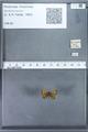 http://mczbase.mcz.harvard.edu/specimen_images/ent-lepidoptera/images/2010_01_06/IMG_027416.JPG