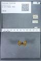 http://mczbase.mcz.harvard.edu/specimen_images/ent-lepidoptera/images/2010_01_06/IMG_027418.JPG