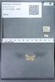 http://mczbase.mcz.harvard.edu/specimen_images/ent-lepidoptera/images/2010_01_06/IMG_027420.JPG