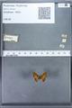 http://mczbase.mcz.harvard.edu/specimen_images/ent-lepidoptera/images/2010_01_06/IMG_027421.JPG