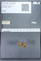http://mczbase.mcz.harvard.edu/specimen_images/ent-lepidoptera/images/2010_01_06/IMG_027422.JPG