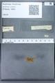 http://mczbase.mcz.harvard.edu/specimen_images/ent-lepidoptera/images/2010_01_06/IMG_027424.JPG