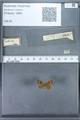 http://mczbase.mcz.harvard.edu/specimen_images/ent-lepidoptera/images/2010_01_06/IMG_027425.JPG