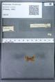 http://mczbase.mcz.harvard.edu/specimen_images/ent-lepidoptera/images/2010_01_06/IMG_027427.JPG