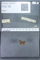 http://mczbase.mcz.harvard.edu/specimen_images/ent-lepidoptera/images/2010_01_06/IMG_027428.JPG