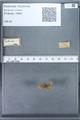 http://mczbase.mcz.harvard.edu/specimen_images/ent-lepidoptera/images/2010_01_06/IMG_027429.JPG