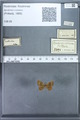 http://mczbase.mcz.harvard.edu/specimen_images/ent-lepidoptera/images/2010_01_06/IMG_027433.JPG