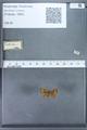 http://mczbase.mcz.harvard.edu/specimen_images/ent-lepidoptera/images/2010_01_06/IMG_027435.JPG