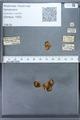 http://mczbase.mcz.harvard.edu/specimen_images/ent-lepidoptera/images/2010_01_06/IMG_027438.JPG
