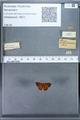 http://mczbase.mcz.harvard.edu/specimen_images/ent-lepidoptera/images/2010_01_06/IMG_027448.JPG