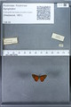 http://mczbase.mcz.harvard.edu/specimen_images/ent-lepidoptera/images/2010_01_06/IMG_027449.JPG