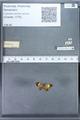 http://mczbase.mcz.harvard.edu/specimen_images/ent-lepidoptera/images/2010_01_06/IMG_027450.JPG