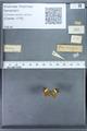 http://mczbase.mcz.harvard.edu/specimen_images/ent-lepidoptera/images/2010_01_06/IMG_027454.JPG