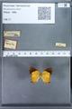http://mczbase.mcz.harvard.edu/specimen_images/ent-lepidoptera/images/2010_01_08/IMG_027994.JPG