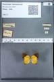 http://mczbase.mcz.harvard.edu/specimen_images/ent-lepidoptera/images/2010_01_08/IMG_027995.JPG
