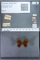 http://mczbase.mcz.harvard.edu/specimen_images/ent-lepidoptera/images/2010_01_08/IMG_028017.JPG
