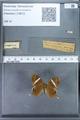 http://mczbase.mcz.harvard.edu/specimen_images/ent-lepidoptera/images/2010_01_08/IMG_028071.JPG