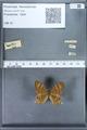 http://mczbase.mcz.harvard.edu/specimen_images/ent-lepidoptera/images/2010_01_08/IMG_028080.JPG