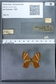 http://mczbase.mcz.harvard.edu/specimen_images/ent-lepidoptera/images/2010_01_08/IMG_028081.JPG