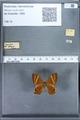 http://mczbase.mcz.harvard.edu/specimen_images/ent-lepidoptera/images/2010_01_08/IMG_028082.JPG
