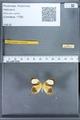 http://mczbase.mcz.harvard.edu/specimen_images/ent-lepidoptera/images/2010_01_08/IMG_028138.JPG