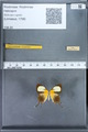 http://mczbase.mcz.harvard.edu/specimen_images/ent-lepidoptera/images/2010_01_08/IMG_028140.JPG