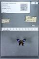 http://mczbase.mcz.harvard.edu/specimen_images/ent-lepidoptera/images/2010_01_09/IMG_028220.JPG