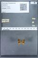 http://mczbase.mcz.harvard.edu/specimen_images/ent-lepidoptera/images/2010_01_09/IMG_028221.JPG