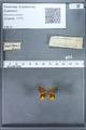 http://mczbase.mcz.harvard.edu/specimen_images/ent-lepidoptera/images/2010_01_09/IMG_028222.JPG