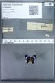 http://mczbase.mcz.harvard.edu/specimen_images/ent-lepidoptera/images/2010_01_09/IMG_028223.JPG
