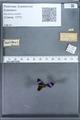 http://mczbase.mcz.harvard.edu/specimen_images/ent-lepidoptera/images/2010_01_09/IMG_028224.JPG