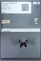 http://mczbase.mcz.harvard.edu/specimen_images/ent-lepidoptera/images/2010_01_09/IMG_028226.JPG