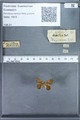 http://mczbase.mcz.harvard.edu/specimen_images/ent-lepidoptera/images/2010_01_09/IMG_028229.JPG