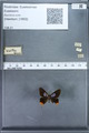 http://mczbase.mcz.harvard.edu/specimen_images/ent-lepidoptera/images/2010_01_09/IMG_028230.JPG